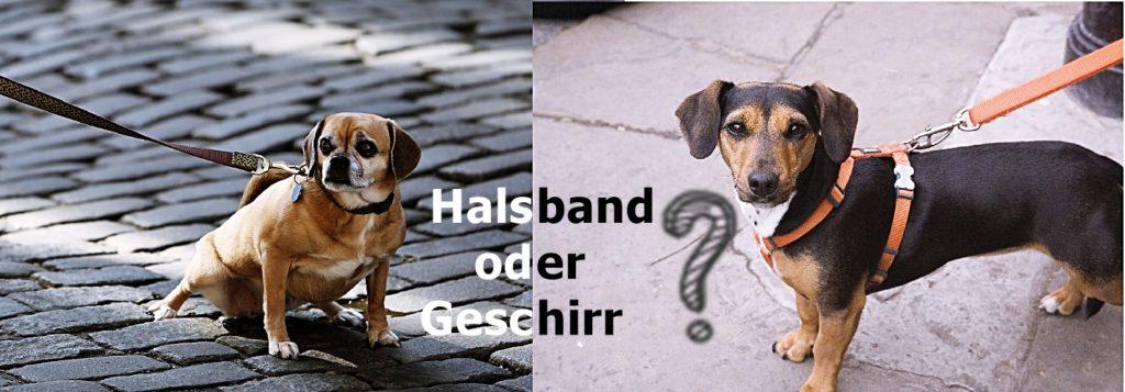 Halsband oder Geschirr für den Hund