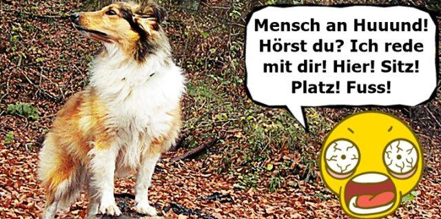 Aufmerksamkeit vom Hund