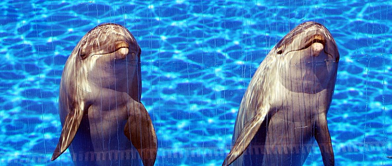 Delfine intelligente Tiere