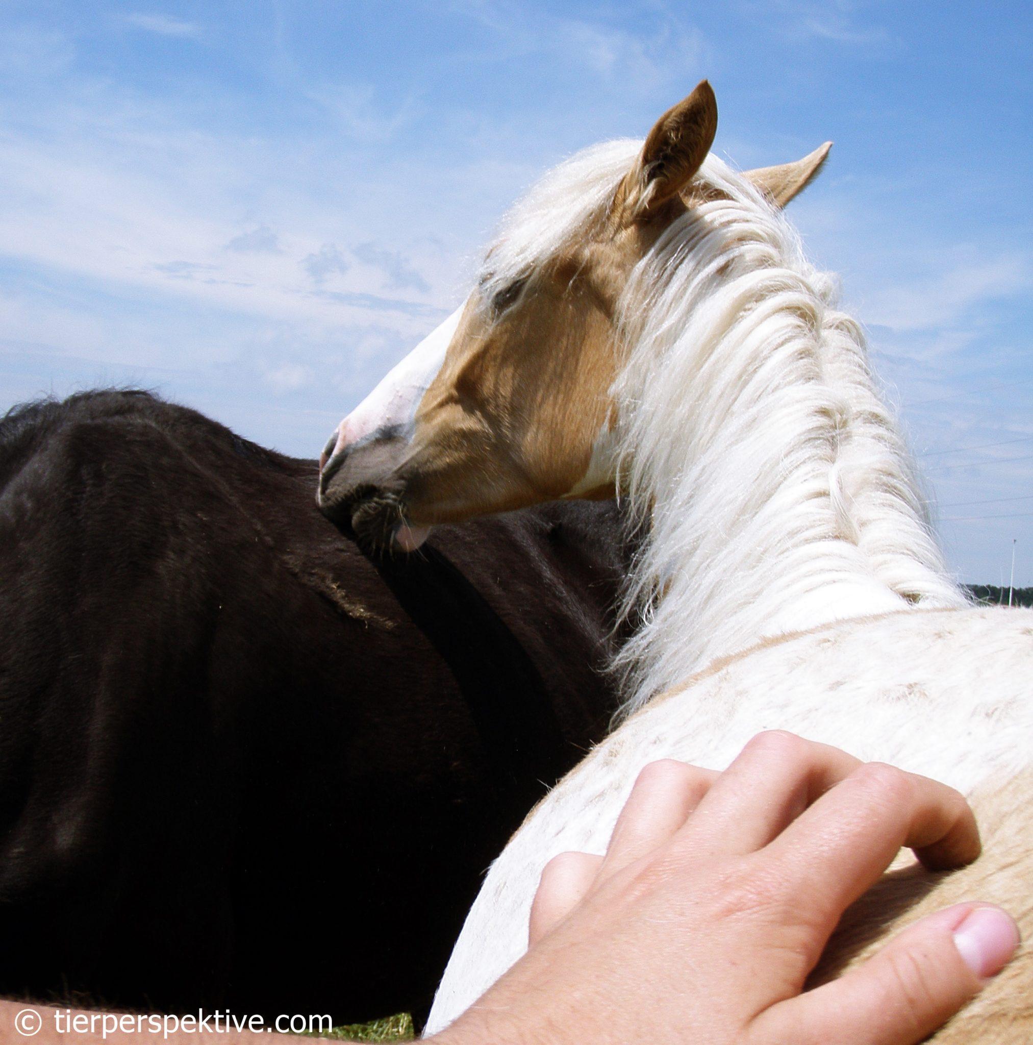pferd krault mensch