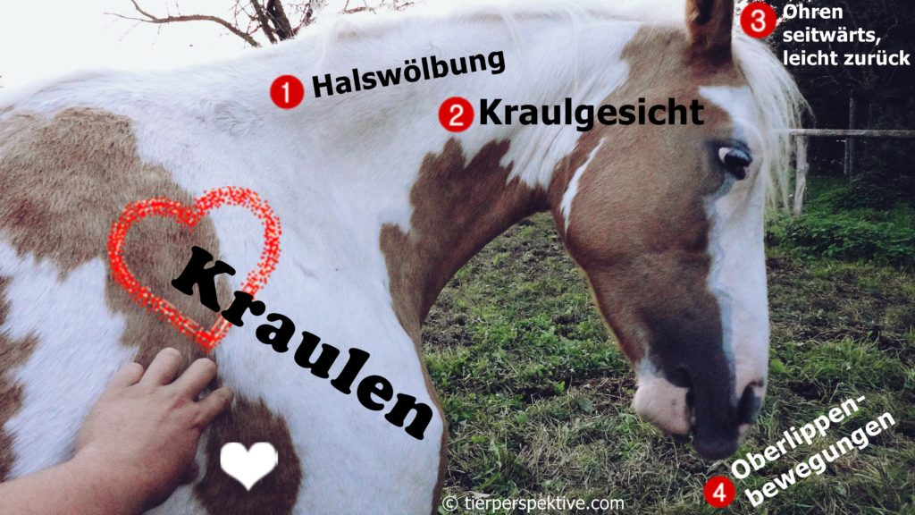 pferdeverhalten wenn pferd kraulen gefällt