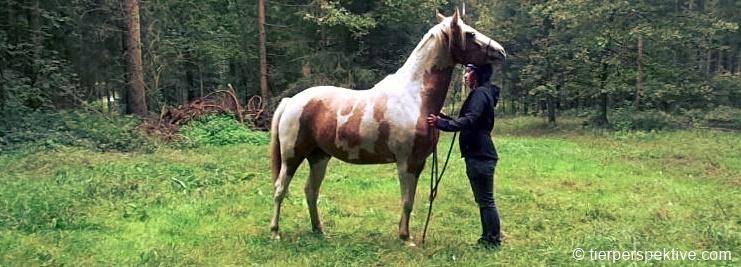 pferd-geniesst-kraulen