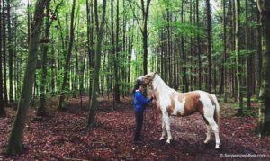 wie streichelt man ein pferd richtig