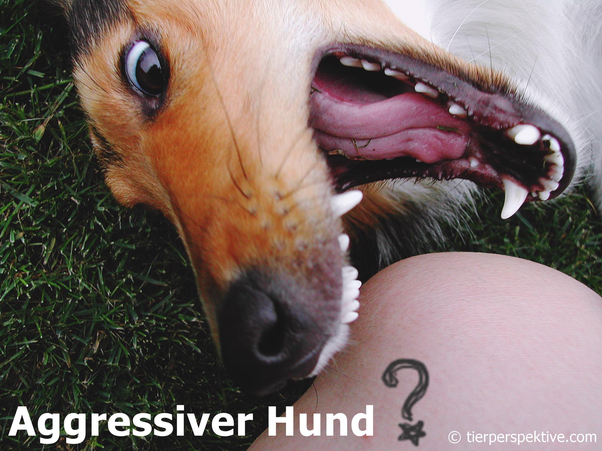 aggression hund ursachen erkennen verhalten verstehen richtig reagieren