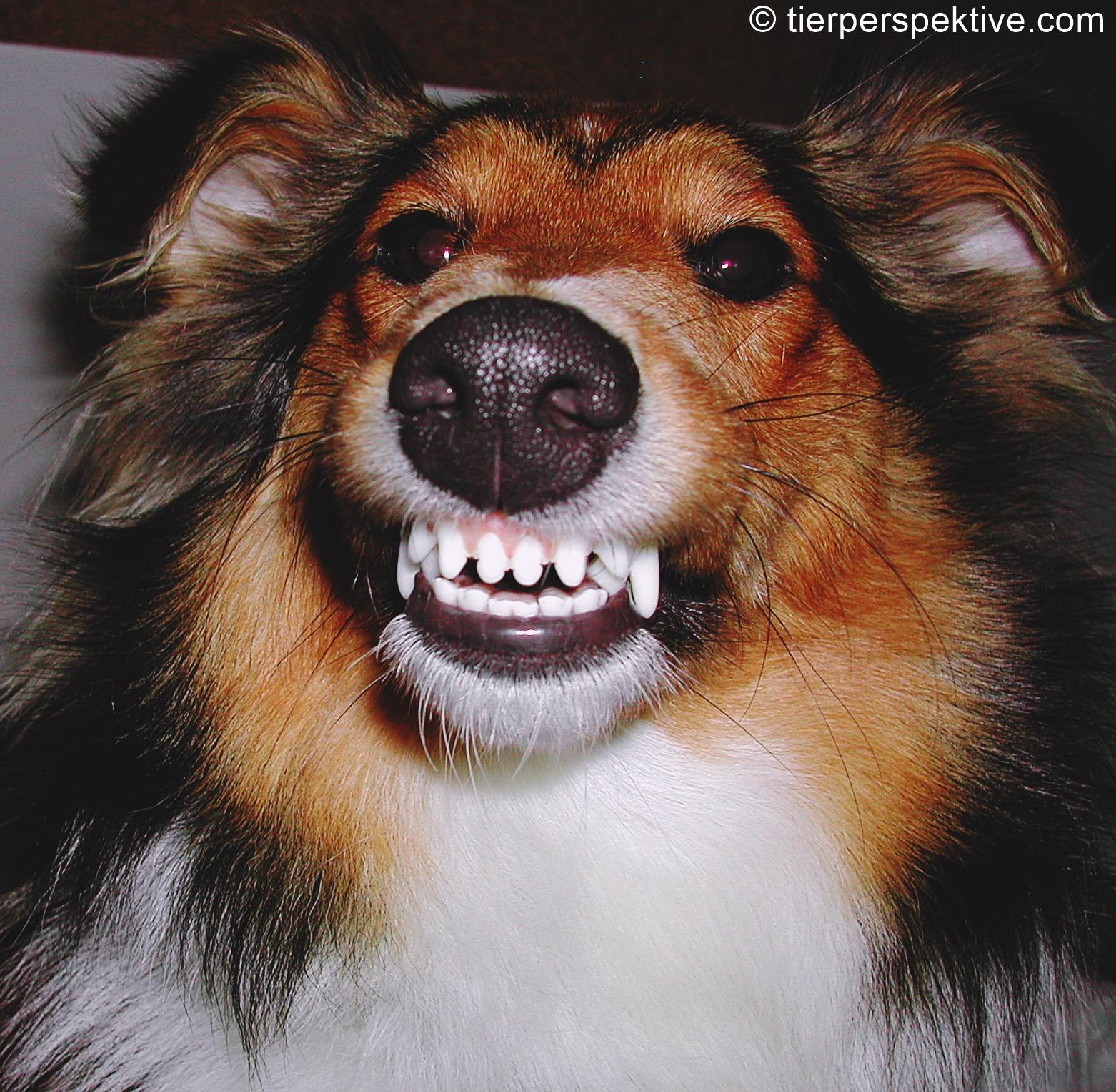 ursachen für aggressives verhalten bei hunden