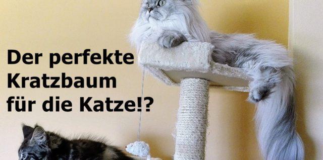 Welchen Kratzbaum mögen Katzen?