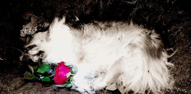 hund gestorben beileid
