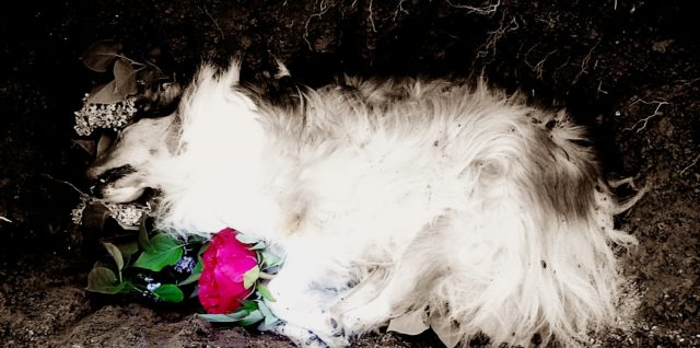 Haustier gestorben was tun