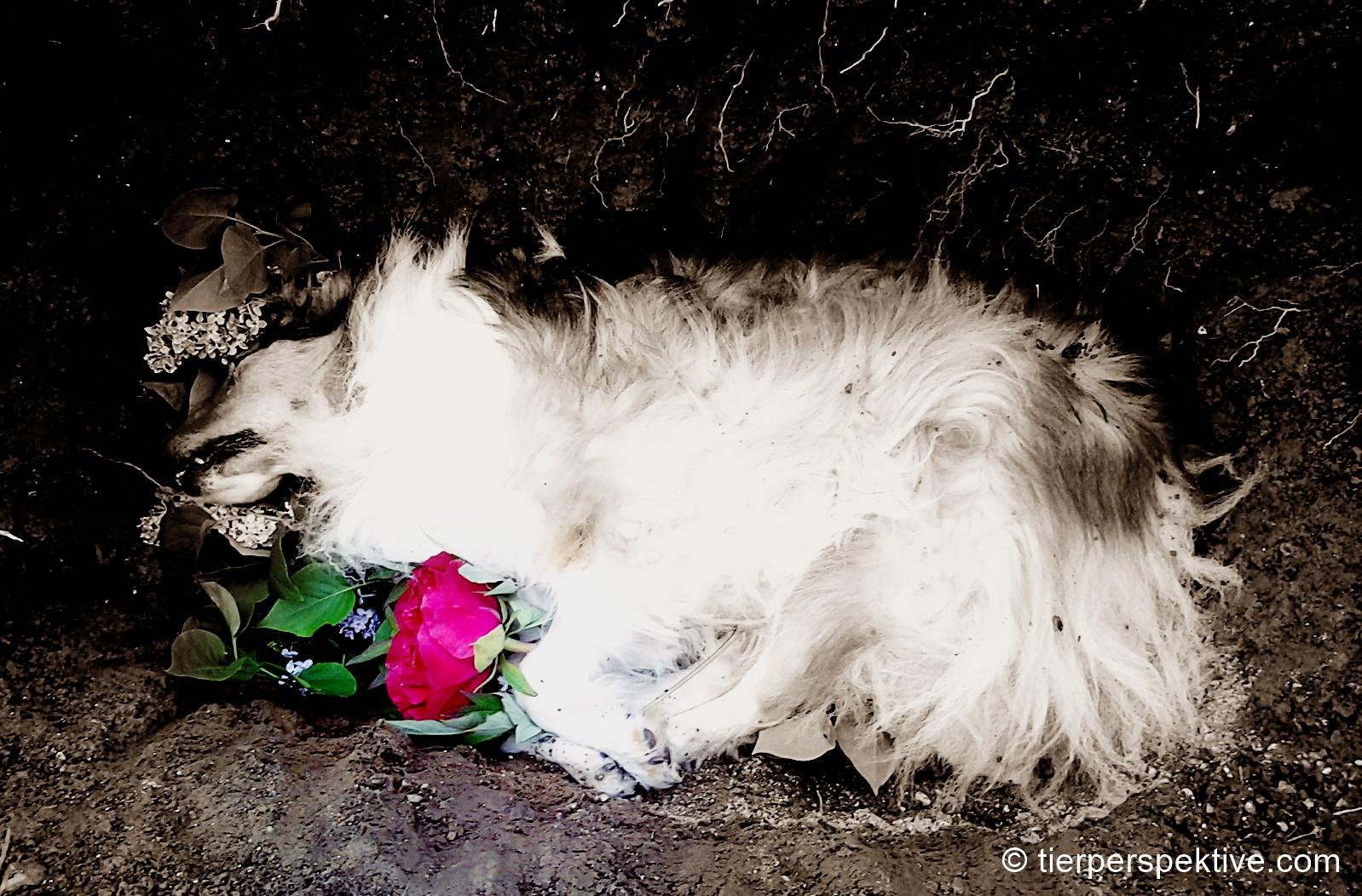 Beerdigung nach Tod des Haustieres