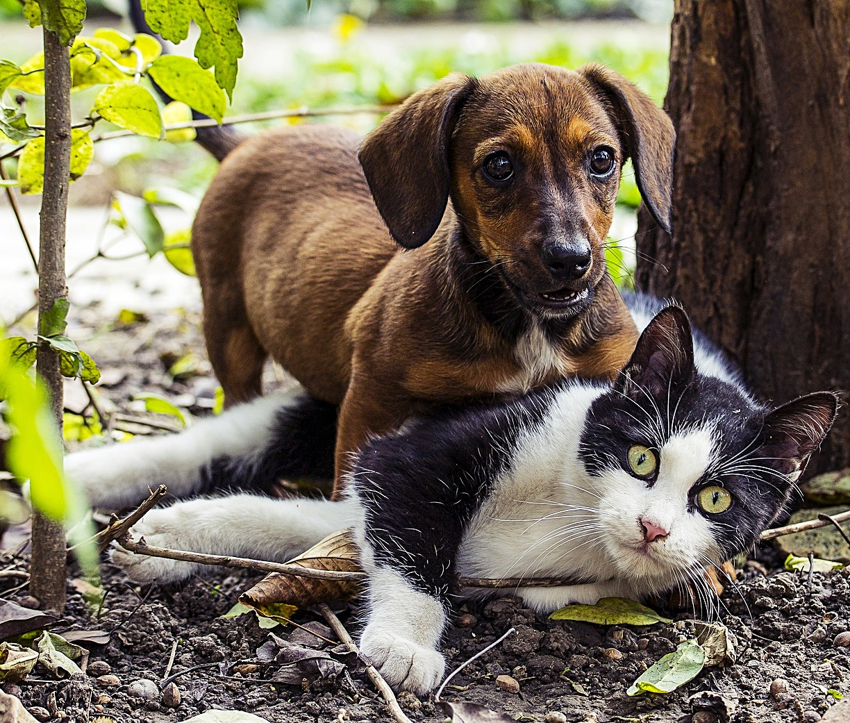 wie herausfinden ob mein hund katzen mag