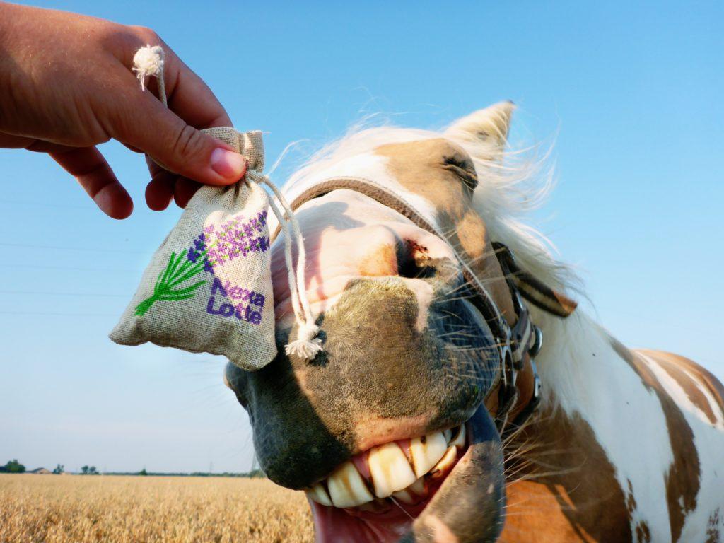 nervöses Pferd ruhiger bekommen