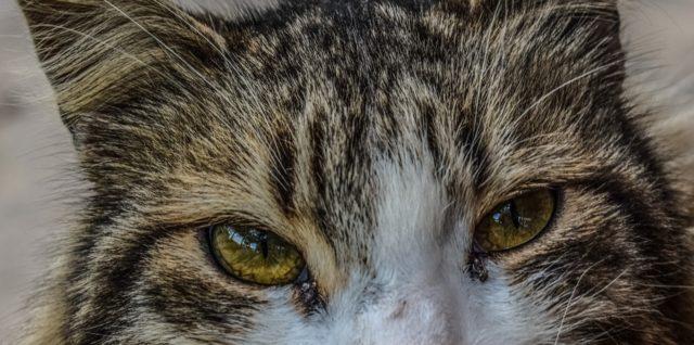 Schmerzen erkennen bei Katzen