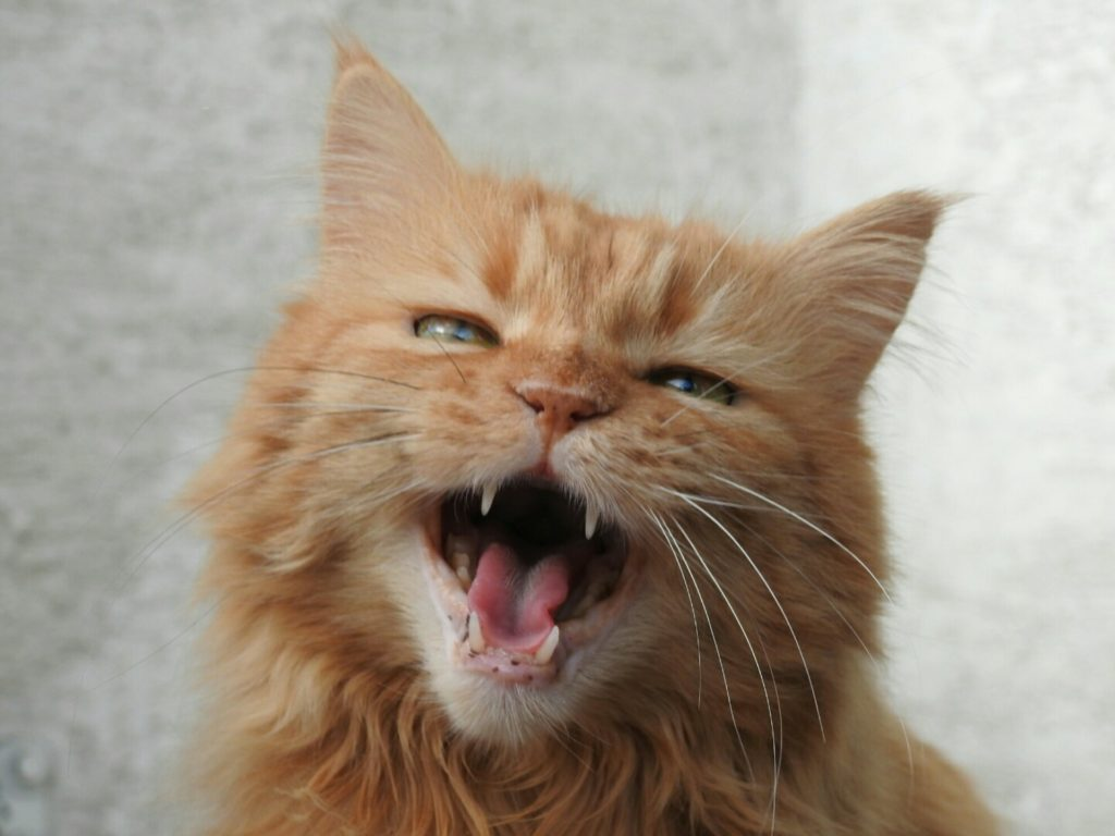 Katzenbesitzer Charakter