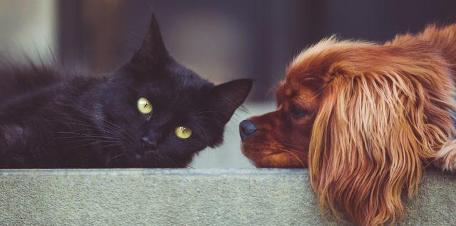 Hund und Katze Erfahrungen