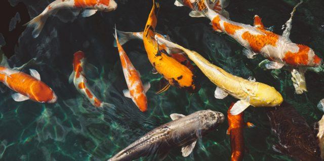 Fische artgerecht halten