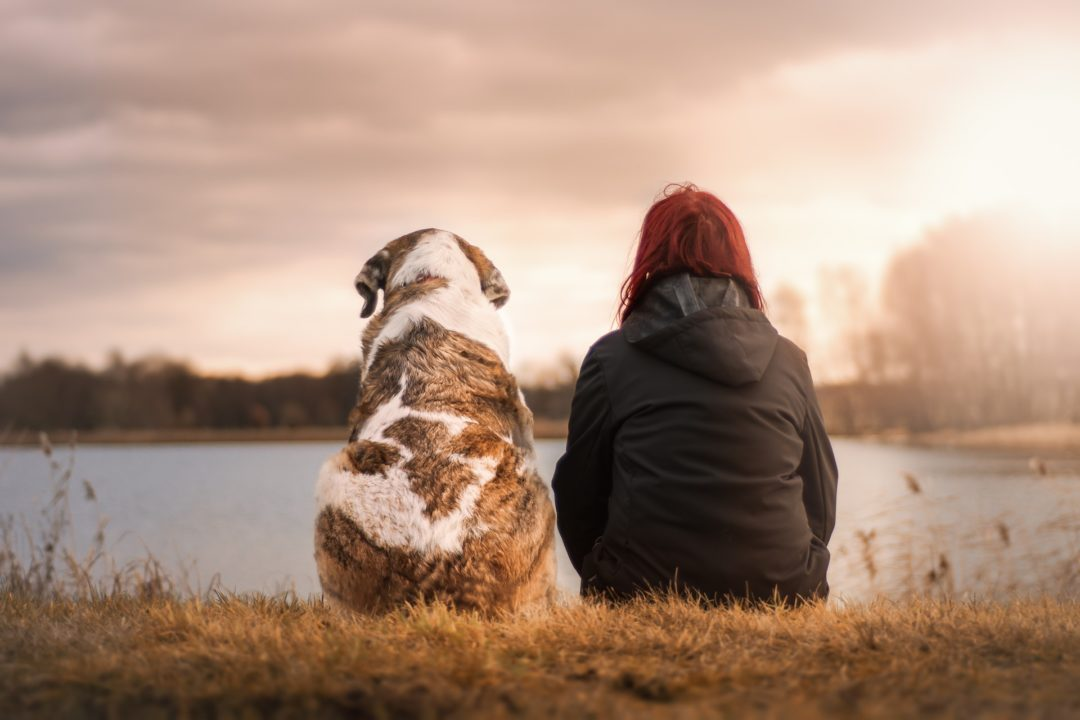 Gestorben trost hund Trauersprüche Hund: