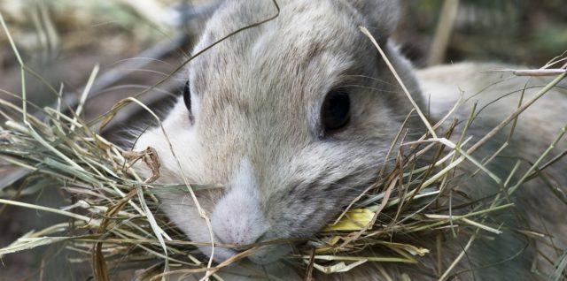 gesundes Kaninchenfutter