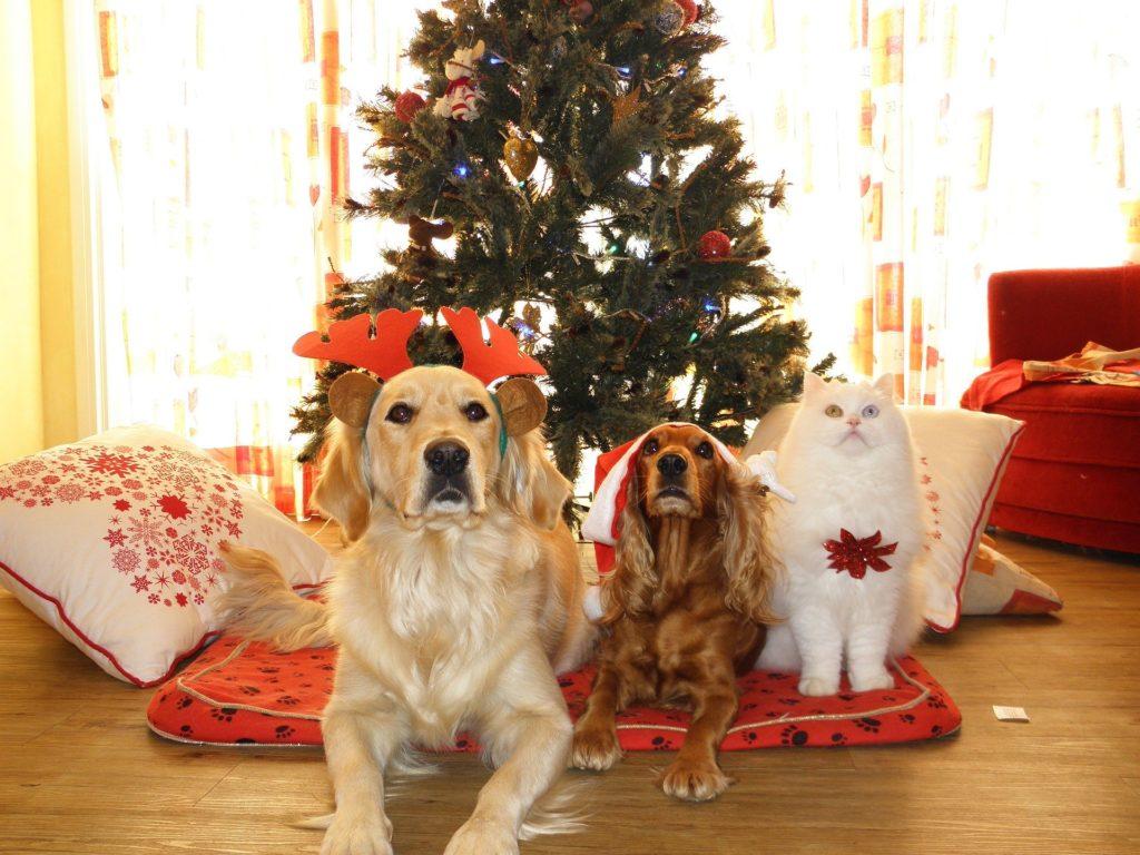 weihnachten mit hund und katze