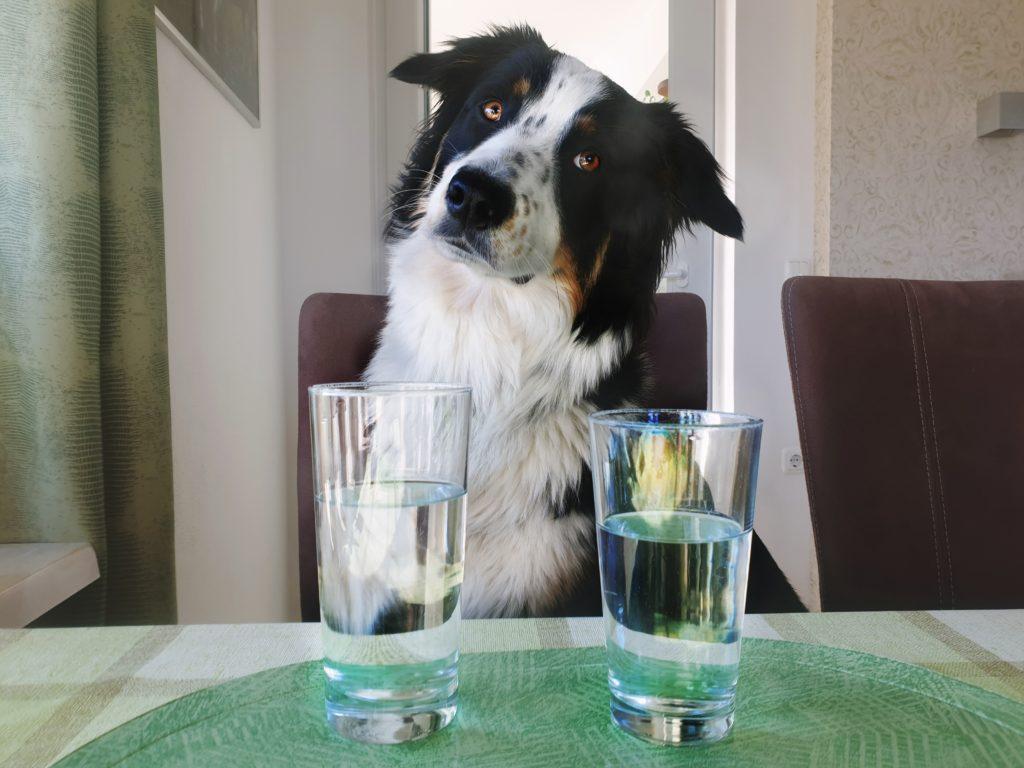 Hund mit Wasserglas